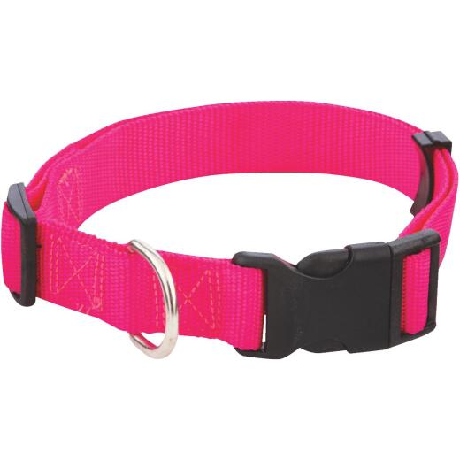 Westminster Pet Ruffin' it Fashion 18 In. to 26 In. Nylon Dog Collar