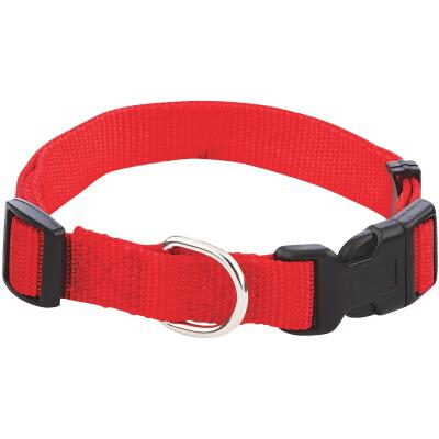 Westminster Pet Ruffin' it Adjustable 14 In. to 20 In. Nylon Dog Collar